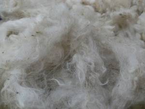 Scrumptious Portland fleece - but mucky!